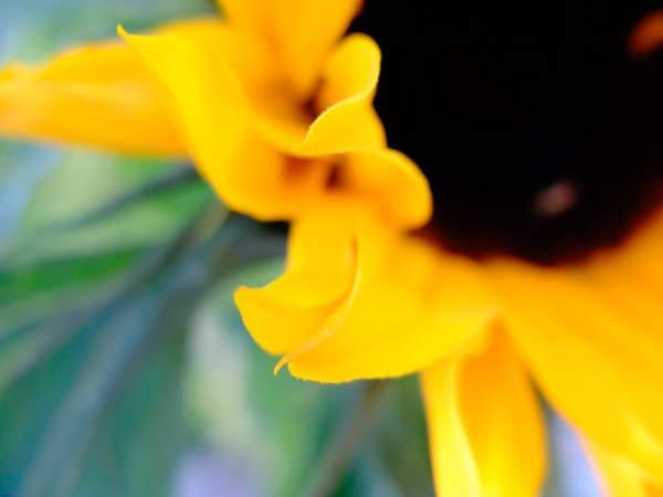Cinco maneiras de criar fotos detalhadas