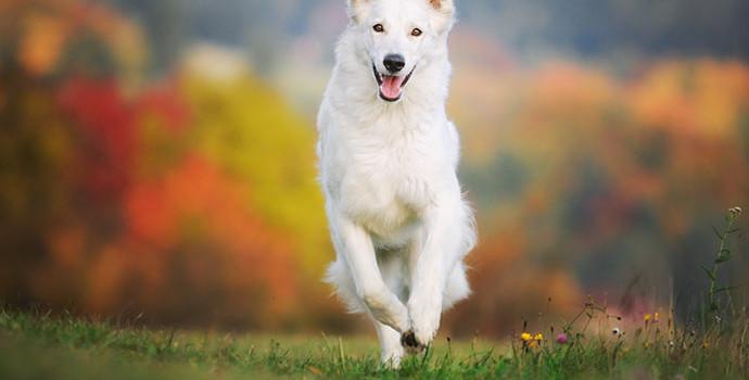 Dicas para fotografar animais de estimação