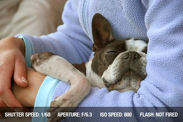 photographing pets1 Dicas para fotografar animais de estimação