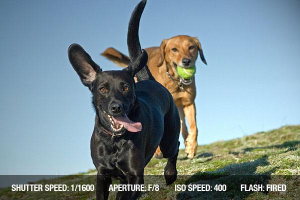photographing pets2 Dicas para fotografar animais de estimação