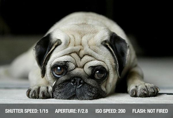 photographing pets3 Dicas para fotografar animais de estimação