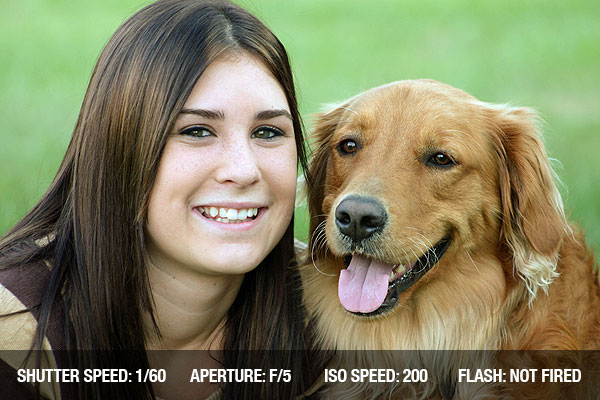 Dicas de fotografias de animais de estimação
