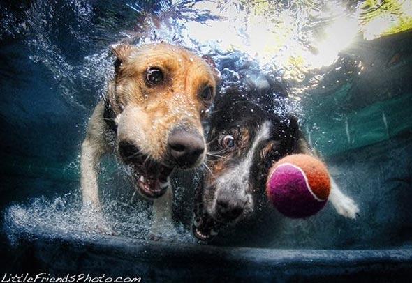 Seth-Casteels-Underwater-Dog-Photography-10