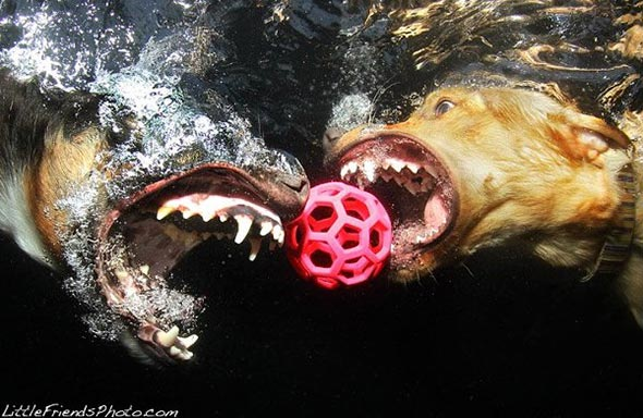 Seth-Casteels-Underwater-Dog-Photography-11
