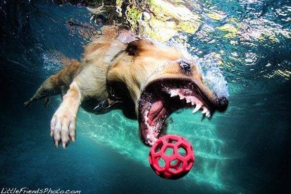 Seth-Casteels-Underwater-Dog-Photography-12