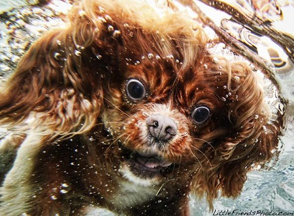 Seth-Casteels-Underwater-Dog-Photography-14