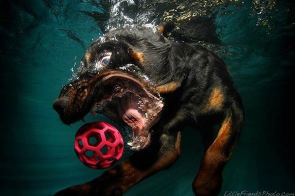 Seth-Casteels-Underwater-Dog-Photography-16