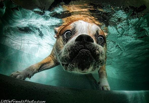 Seth-Casteels-Underwater-Dog-Photography-17