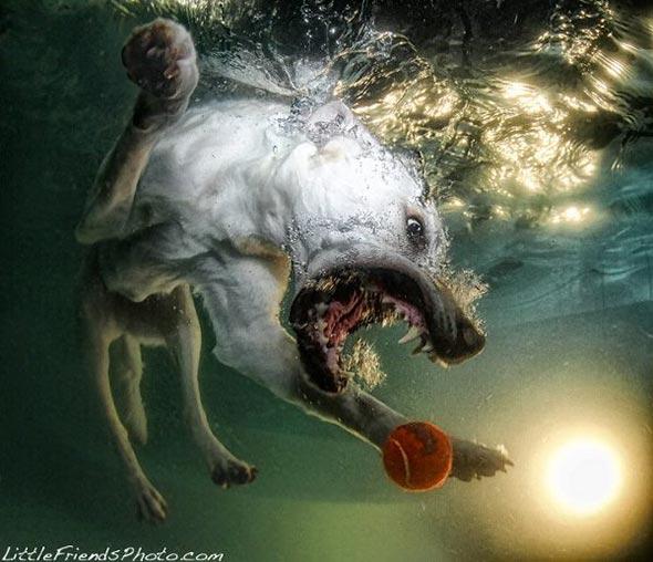 Seth-Casteels-Underwater-Dog-Photography-18