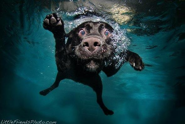 Seth-Casteels-Underwater-Dog-Photography-19