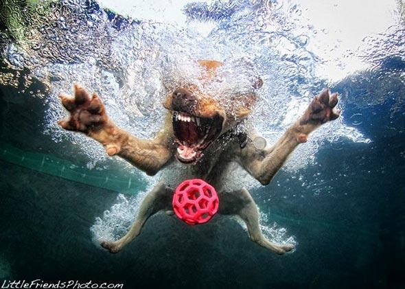 Seth-Casteels-Underwater-Dog-Photography-3