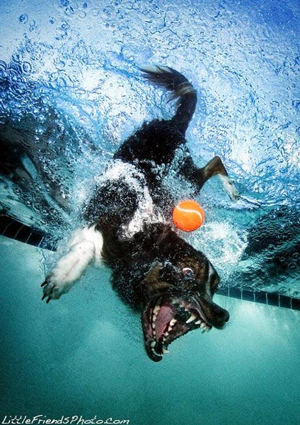 Seth-Casteels-Underwater-Dog-Photography-5