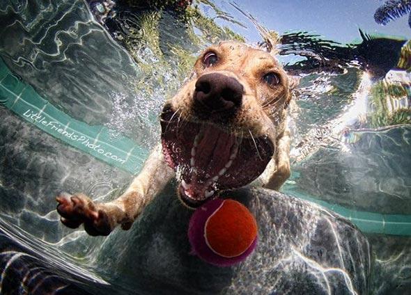 Seth-Casteels-Underwater-Dog-Photography-7
