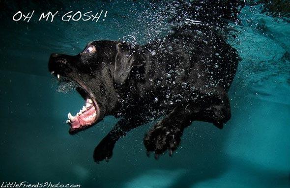 Seth-Casteels-Underwater-Dog-Photography-8
