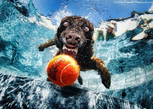 Seth-Casteels-Underwater-Dog-Photography-9