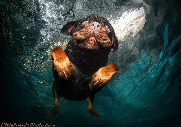 Seth-Casteels-Underwater-Dog-Photographyv-13