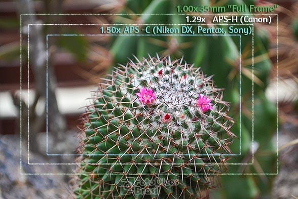 flor fator de corte Jociana Ueland2 Fator de corte, uma questão de tamanho!