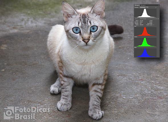 gato histograma Histograma, o que é e como usar