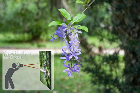 Enquadramento Longe Foto do Artigo Qual o segredo para desfocar o fundo de uma foto Qual o segredo para desfocar o fundo de uma foto?