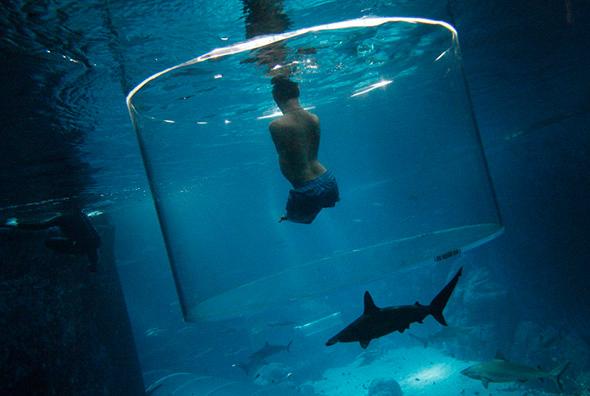 Nick Vujicic, um palestrante motivacional australiano que nasceu sem membros, nada com tubarões no Parque da Vida Marinha em Singapura, 5 de setembro de 2013.