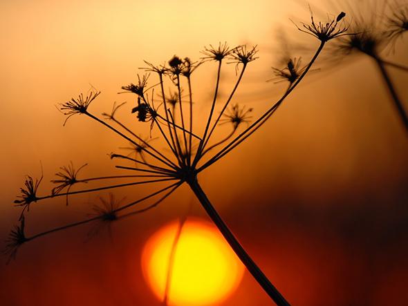 Sunset1 Artigo Dicas para Fotografar Por do Sol1 14 Dicas Para Fotografar Um Pôr do Sol Impressionante
