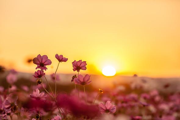 Sunset4-Artigo-Dicas-para-Fotografar-Por-do-Sol