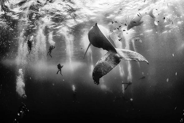 1o Lugar concurso de fotos national geographic 2015 As melhores fotos do Concurso de Fotografia da National Geographic