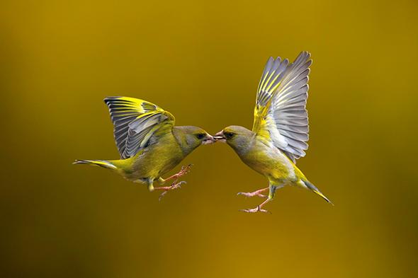 ©Marco Redaelli Introdução à Velocidade do Obturador na Fotografia Digital