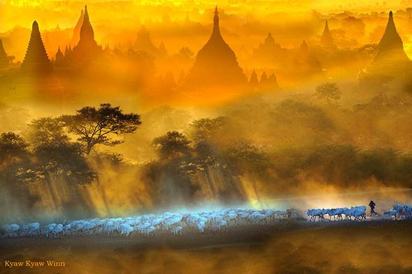 17. Kyaw Kyaw Winn Bagan Cattleherd Uma viagem fotográfica em Myanmar