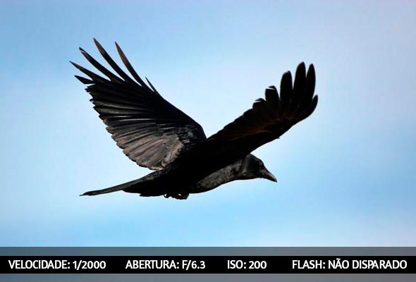 photographing birds 1 Dicas Para Fotografar Aves