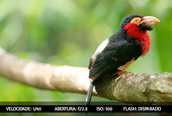 photographing birds 2 Dicas Para Fotografar Aves