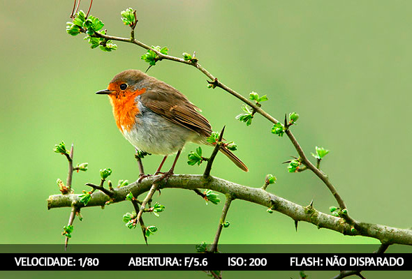 photographing birds 3 Dicas Para Fotografar Aves