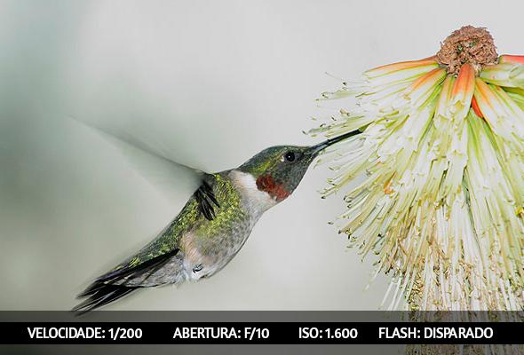 photographing birds 4 Dicas Para Fotografar Aves