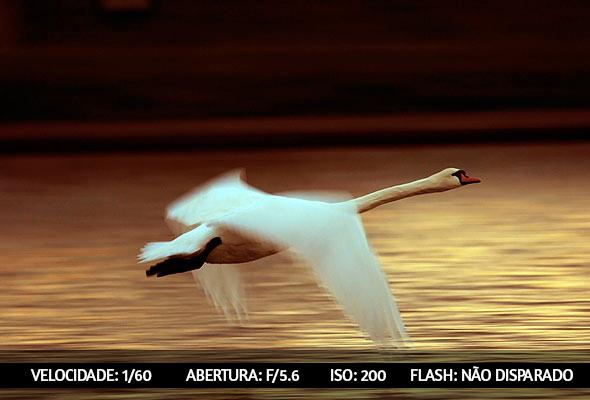 photographing birds 5 Dicas Para Fotografar Aves