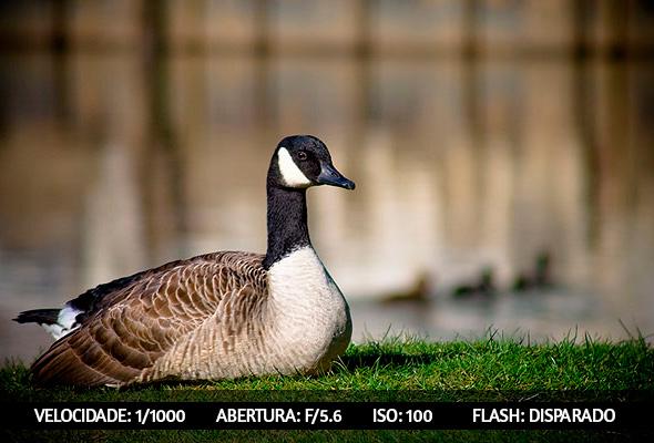 photographing birds 6 Dicas Para Fotografar Aves