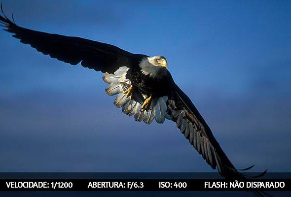 photographing birds 8 Dicas Para Fotografar Aves