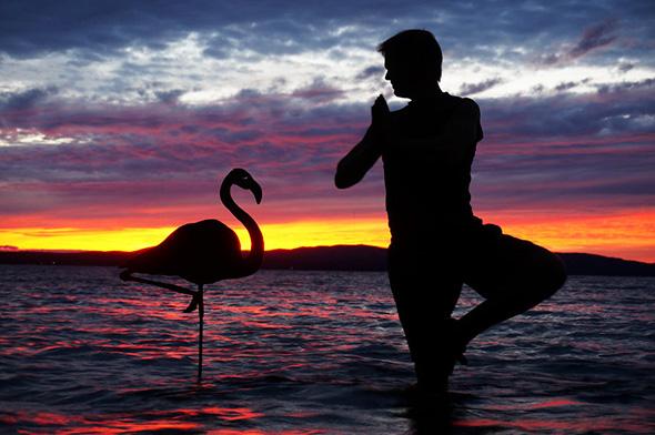 Flamingo Silhuetas Mágicas