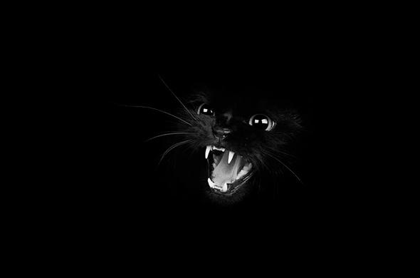 ©Alex Onions Os Mistérios dos Gatos em Preto e Branco