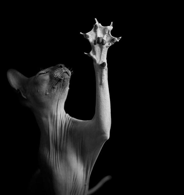 ©Alicia Rius Os Mistérios dos Gatos em Preto e Branco