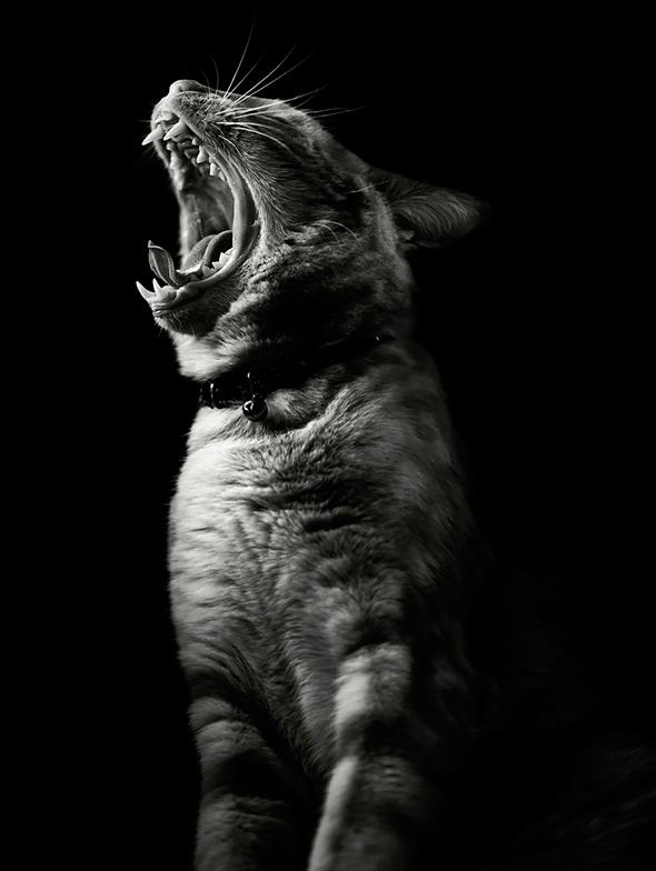 ©Amy Covington Os Mistérios dos Gatos em Preto e Branco