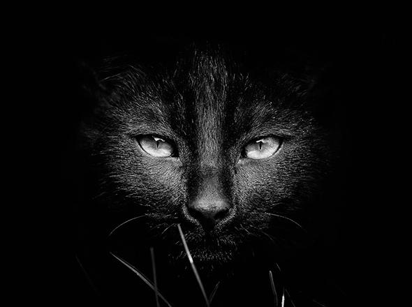 ©David Charouz Os Mistérios dos Gatos em Preto e Branco
