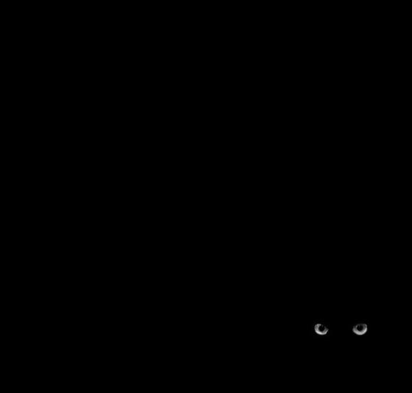 ©Denis Lamblin Os Mistérios dos Gatos em Preto e Branco