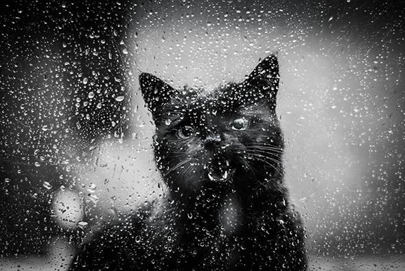 ©Don Jacowbski Report Os Mistérios dos Gatos em Preto e Branco
