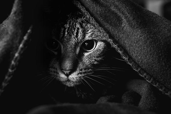 ©Felicity Berkleef Os Mistérios dos Gatos em Preto e Branco
