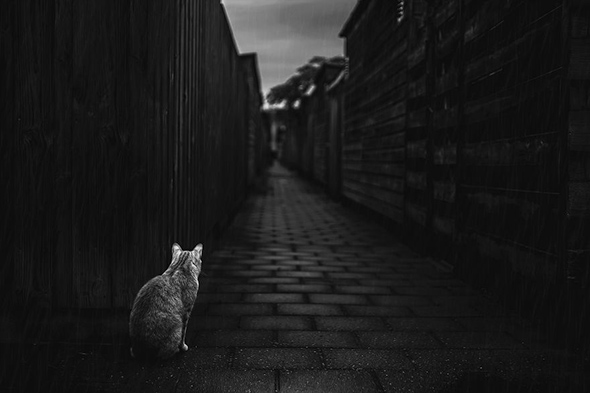©Felicity Berkleef2 Os Mistérios dos Gatos em Preto e Branco