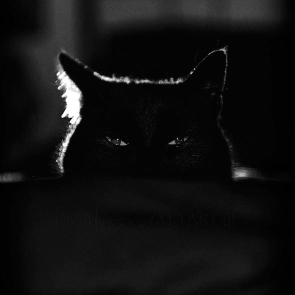 ©Francesco Attardo Os Mistérios dos Gatos em Preto e Branco