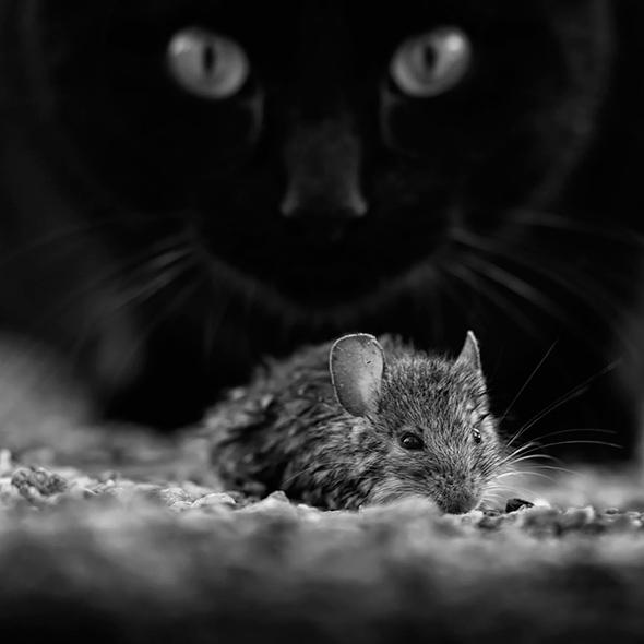 ©Francois Casanova Os Mistérios dos Gatos em Preto e Branco