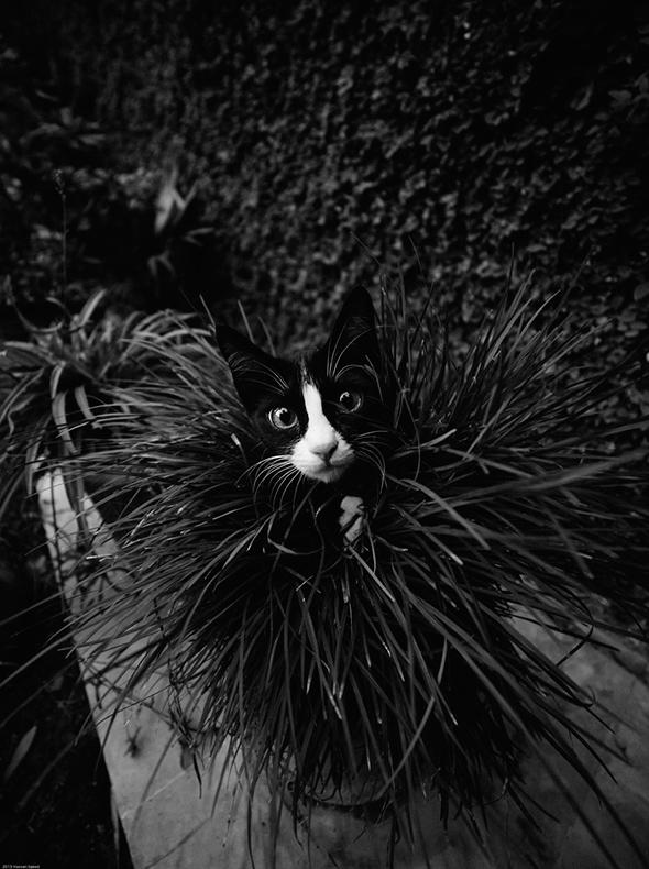 ©Hassan Saeed Os Mistérios dos Gatos em Preto e Branco