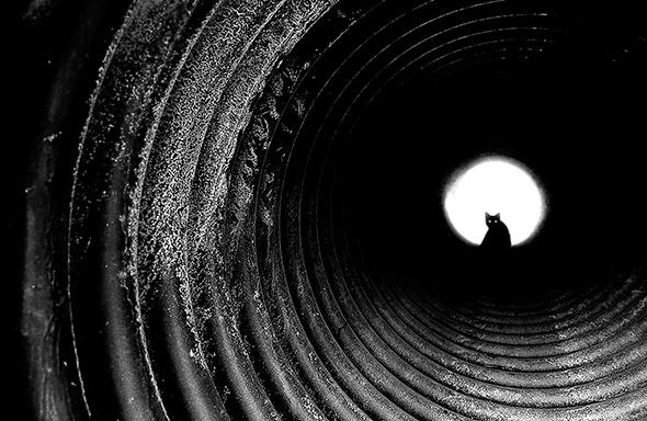©J Os Mistérios dos Gatos em Preto e Branco