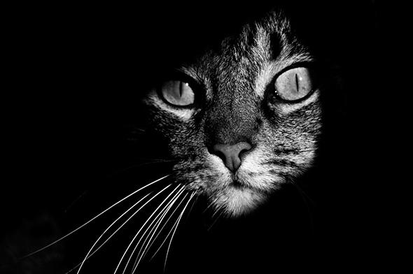 ©João Domingues Report Os Mistérios dos Gatos em Preto e Branco